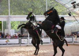 Menorcan horses
