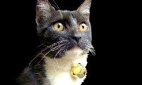 bell-on-cat.jpg