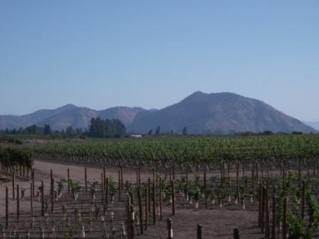 chile-concha-y-toro-extensive-vineyards.JPG