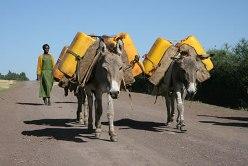 donkey-working-hard.jpg