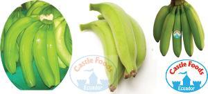 ecuador-bananas.jpg