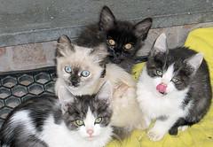 Hay cuatro gatos