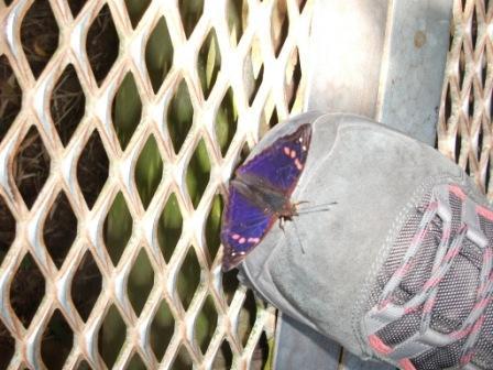 iguazu-butterfly.JPG