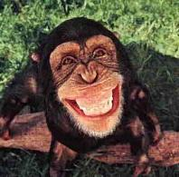 monkey-laughing