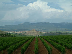 Rioja vineyard
