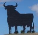 San Fermin - bull