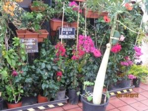 santa-cruz-de-tenerife-prettyflowers-market.jpg