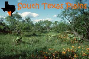 texas-south-plains.jpg