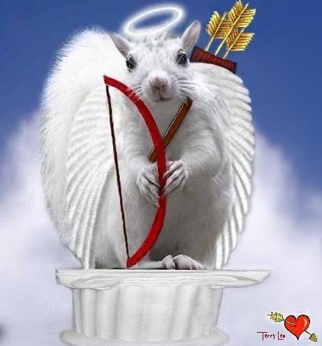 Valentine - cupido