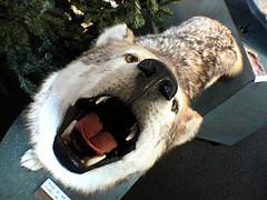 Estar como boca de lobo
