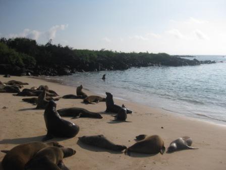 galapagos-beach-of-seals.JPG