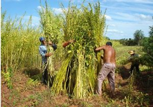 paraguay-agriculture.jpg