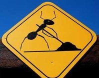 work-like-an-ant